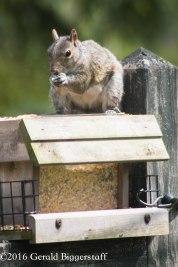 squirreleat-54
