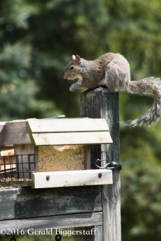 squirreleat-56