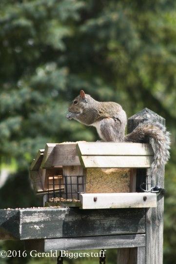 squirreleat-60