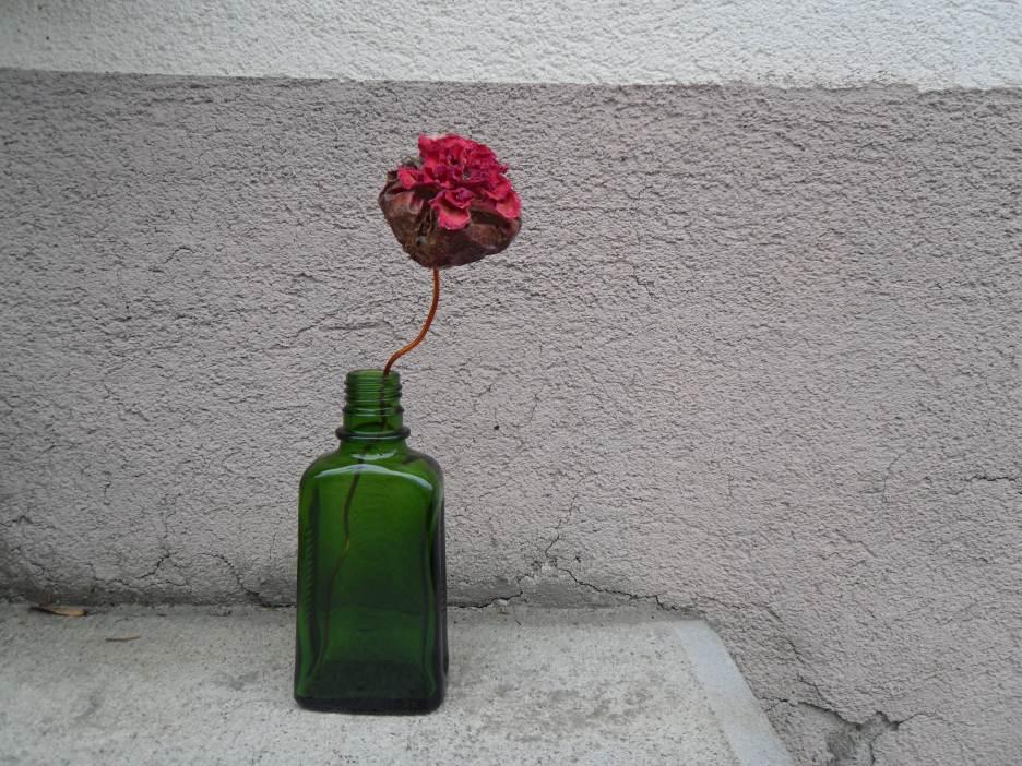 Rose passion