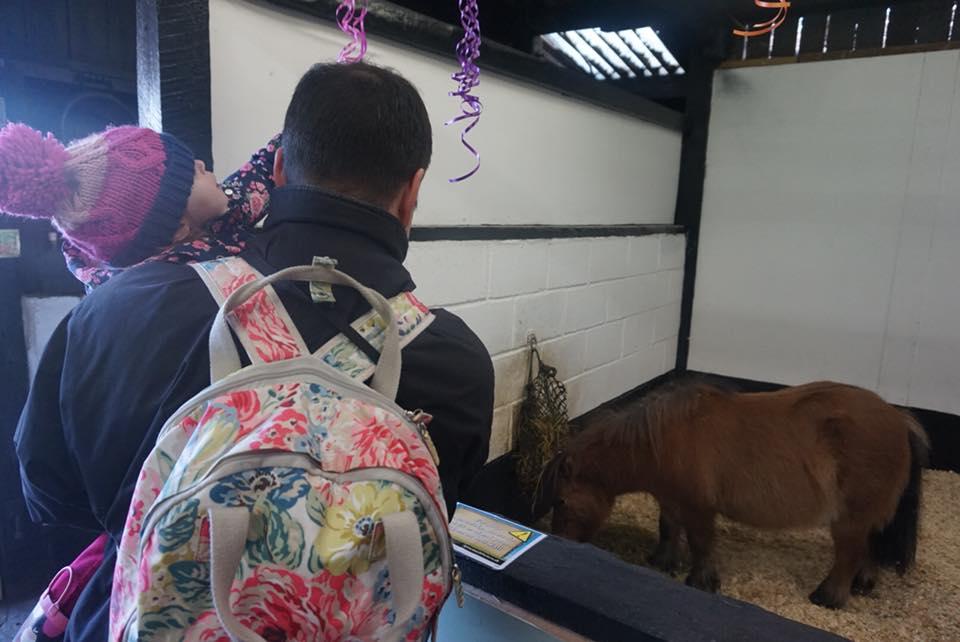 shetland-ponies