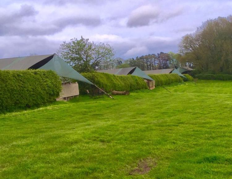 tents at the Dandelion Hideaway