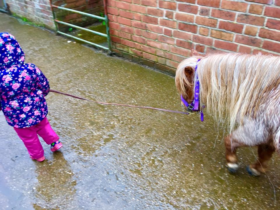 The ponies on the farm at the dandelion hideaway glamping site.