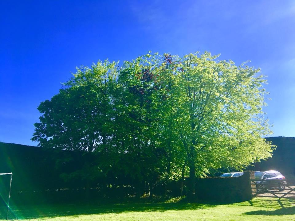 Greenwood Grange Cottages communal garden
