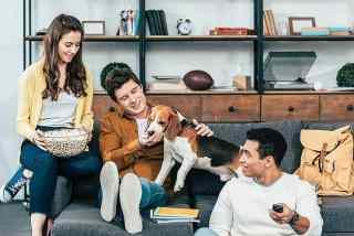 Menschen schauen mit Hund einen Film