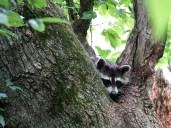 Playing peek-a-boo.