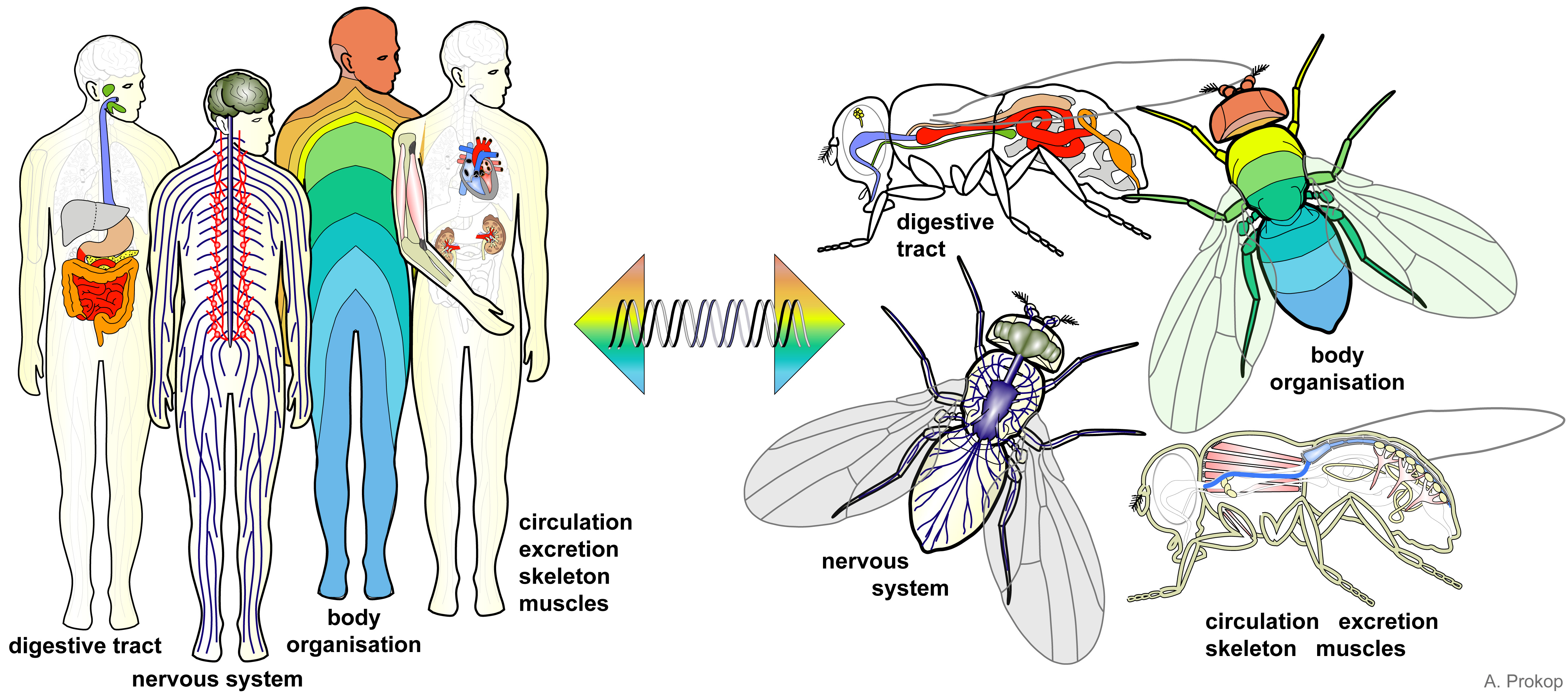 Bringing Life Into Biology Lessons Using The Fruit Fly