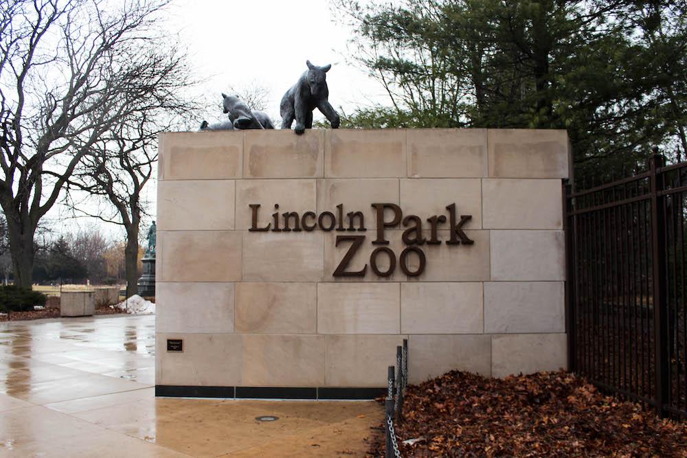 lincoln park zoo chicago poppy anthology