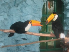 Esfahan bird garden