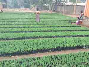 Planting the Next Million Trees