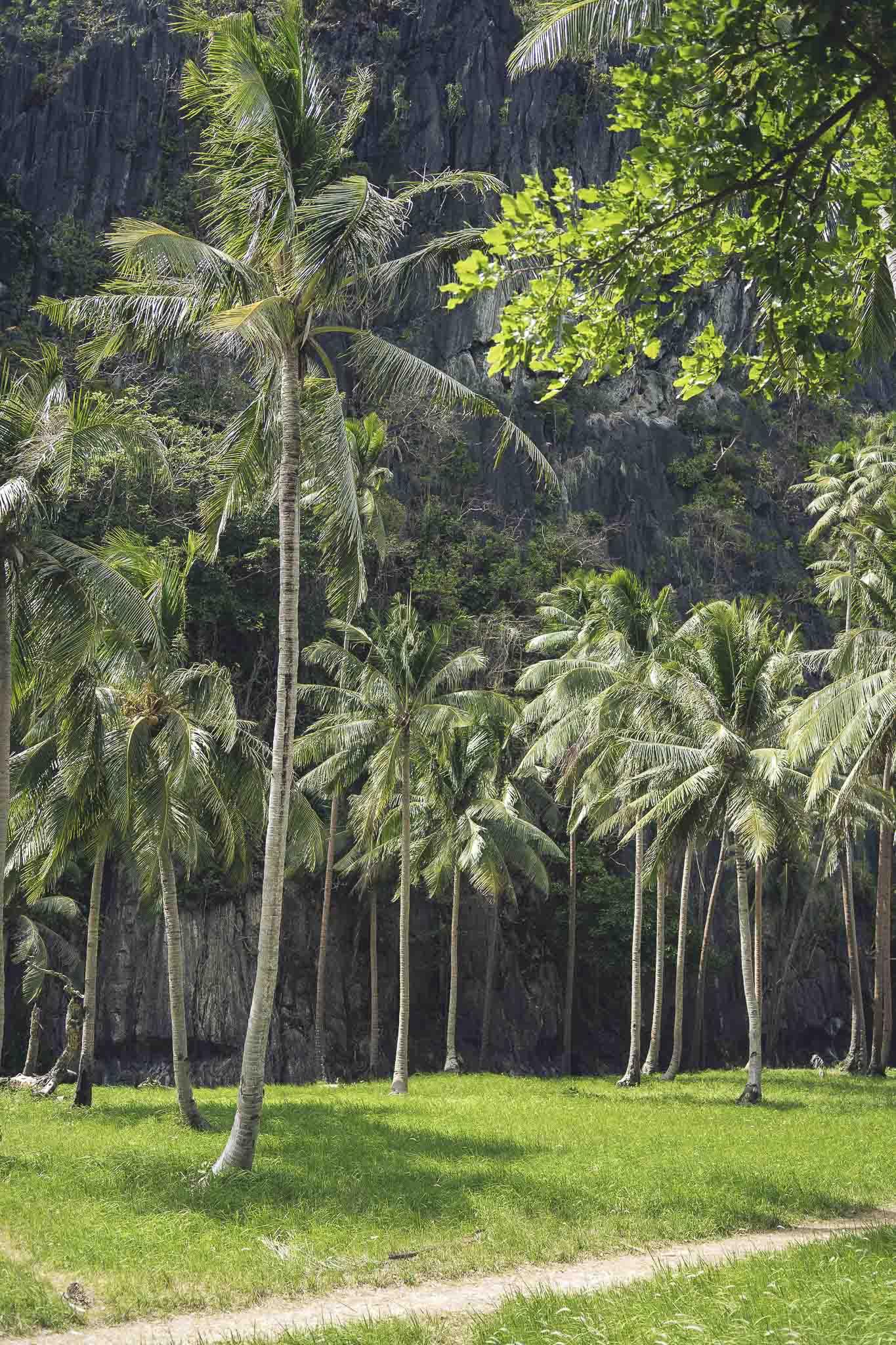 Palmy w całej swej wysokości