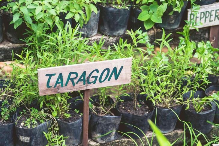 zioła są podpisane, dzięki temu wizyta tutaj to też spora dawka praktycznej wiedzy