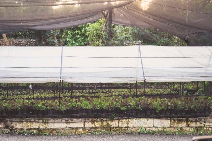 farma Bohol Bee Farm