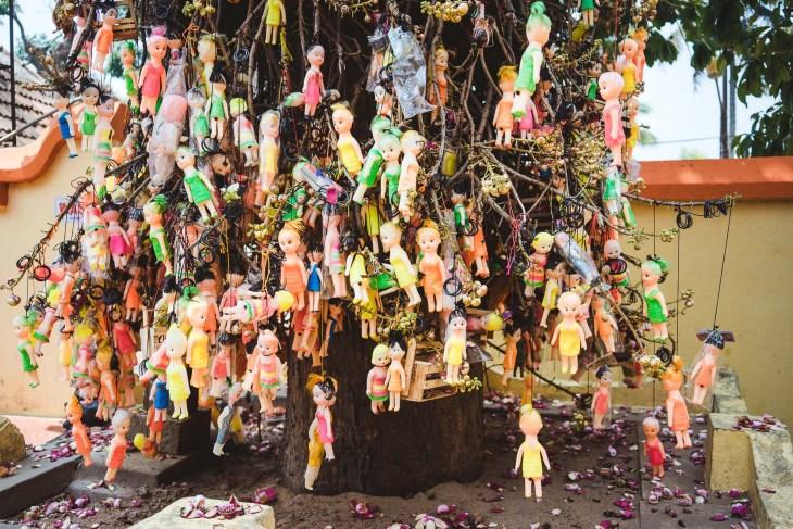 osobliwe drzewo tuż przy świątyni