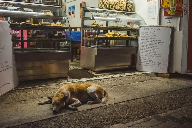 Psy to nieodłączni uliczni towarzysze zarówno w Indiach jak i innych krajów Azji południowo-wschodniej