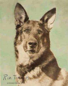 Resgatado de um campo de batalha, ainda filhote, Rin Tin Tin é um dos primeiros cachorros celebridades