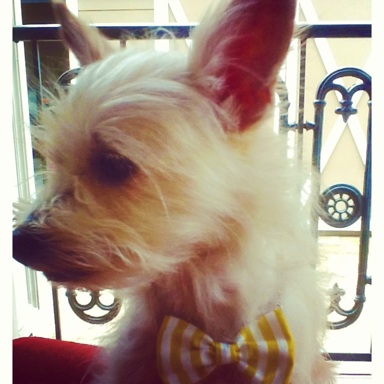 Pup Shop Houston | Dogs with Bowties | Dogs with Crafts from Pop Shop Houston Art Festival