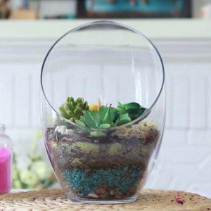 Large Glass Terrarium with Cactus | Modern Looking Terrariums with Cactus & Succulents
