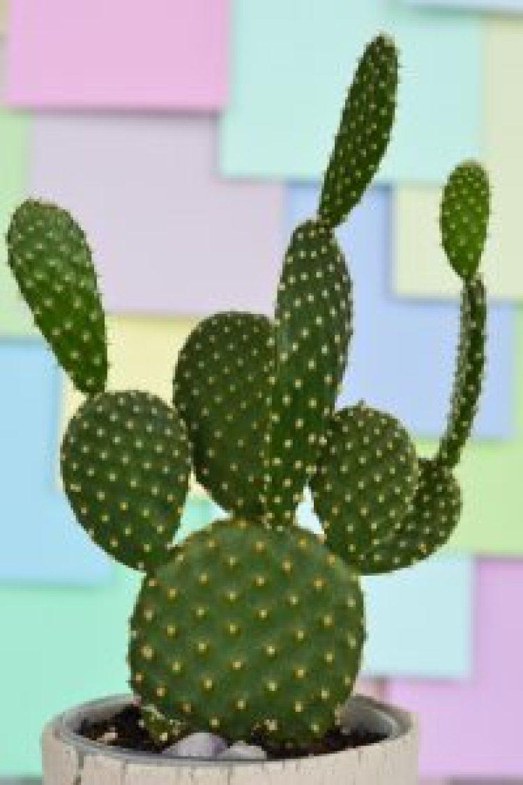 secret-to-succulents