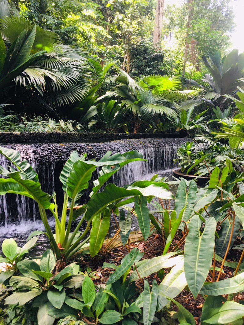 PopsicleSociety_Singapore Botanic Garden4