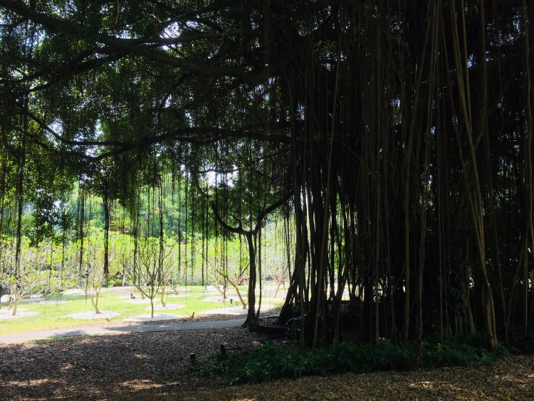 PopsicleSociety_Singapore Botanic Garden8