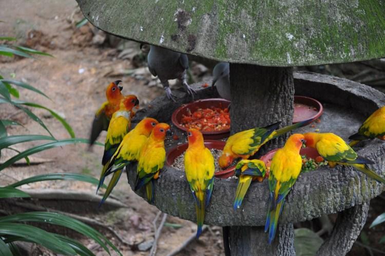 PopsicleSociety-Singapore Bird Park