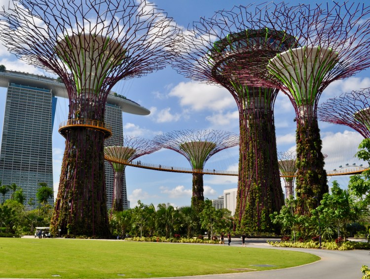Popsicle Society - Garden by the Bay