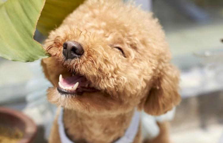 Popsicle Society-dog smile