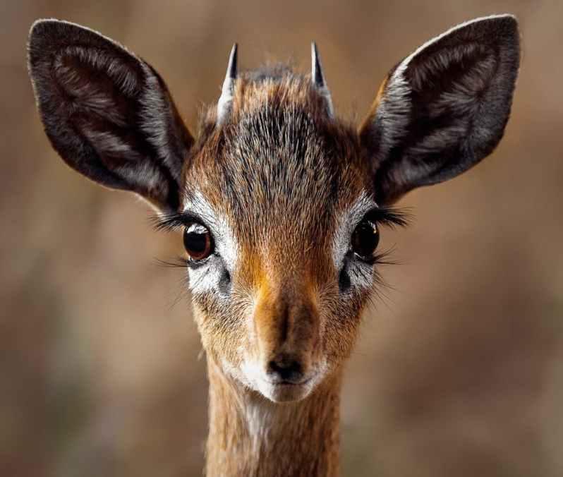 Animals eyes-Popsicle Society