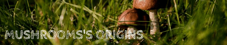 Mushrooms origins_Popsicle Society