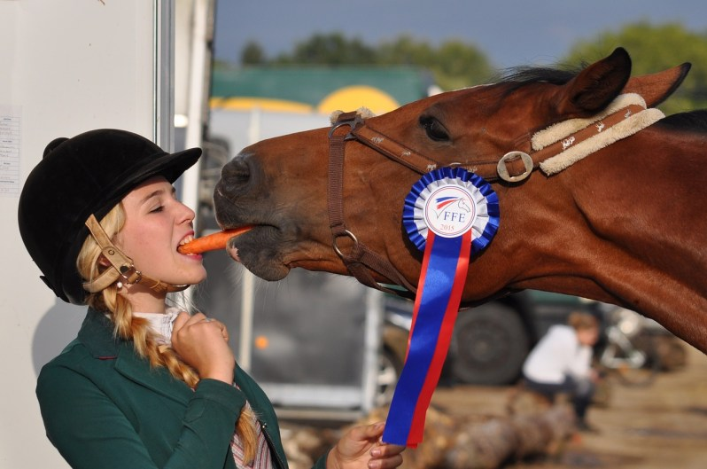 Horse eating carrot_Popsicle Society