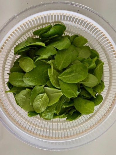 washing and drying baby spinach leaves