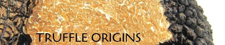 Truffle origins_Popsicle Society