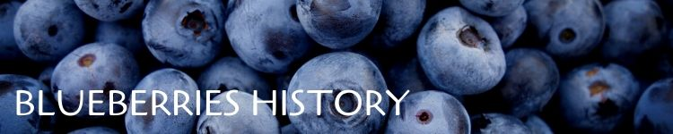 Blueberries origins_Popsicle Society