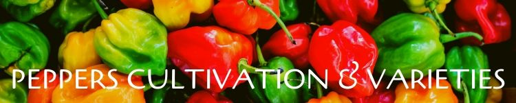 Peppers cultivation and varities_Popsicle Society