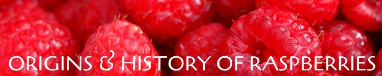 origins and history of raspberries_Popsicle Society