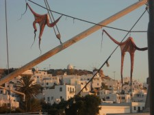 Fishermen like to hang octopus out in the sun to help tenderize the meat