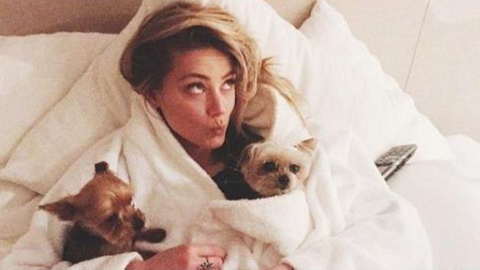 Amber Turd trends she's found guilty of pooping in bed