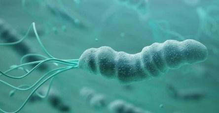 Helicobacter pylori стала в два раза опаснее