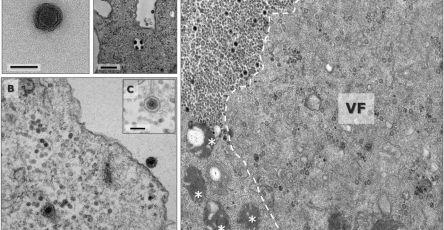 В Бразилии обнаружили новый гигантский вирус