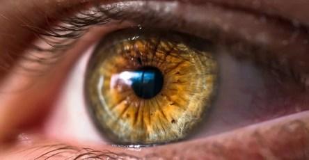 Глаза очищаются так же, как мозг
