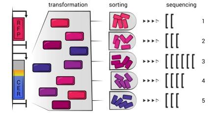 В РНК нашли повышающие эффективность синтеза белка участки