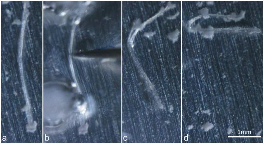 Создан гнущийся при низких температурах органический кристалл
