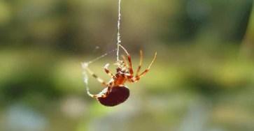 Клей предложили заменить биоразлагаемым паучим шëлком