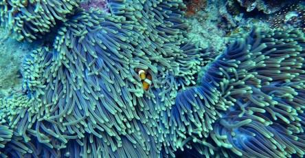 Предотвратить гибель коралловых рифов поможет генетика