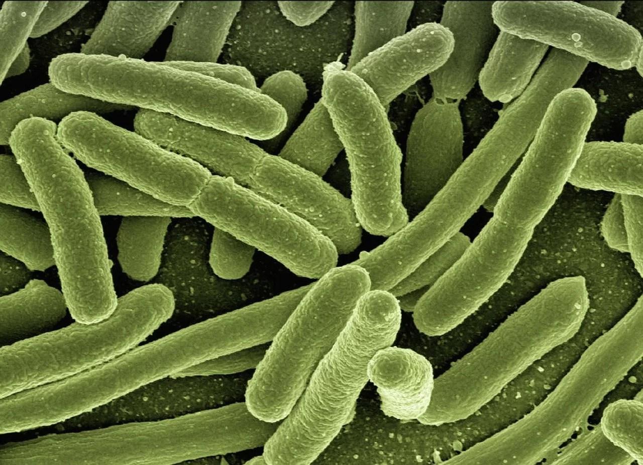 Учёные раскрыли функции ферментов, окисляющих жирные кислоты