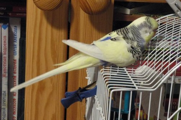 새장에 잠 들어있는 앵무새