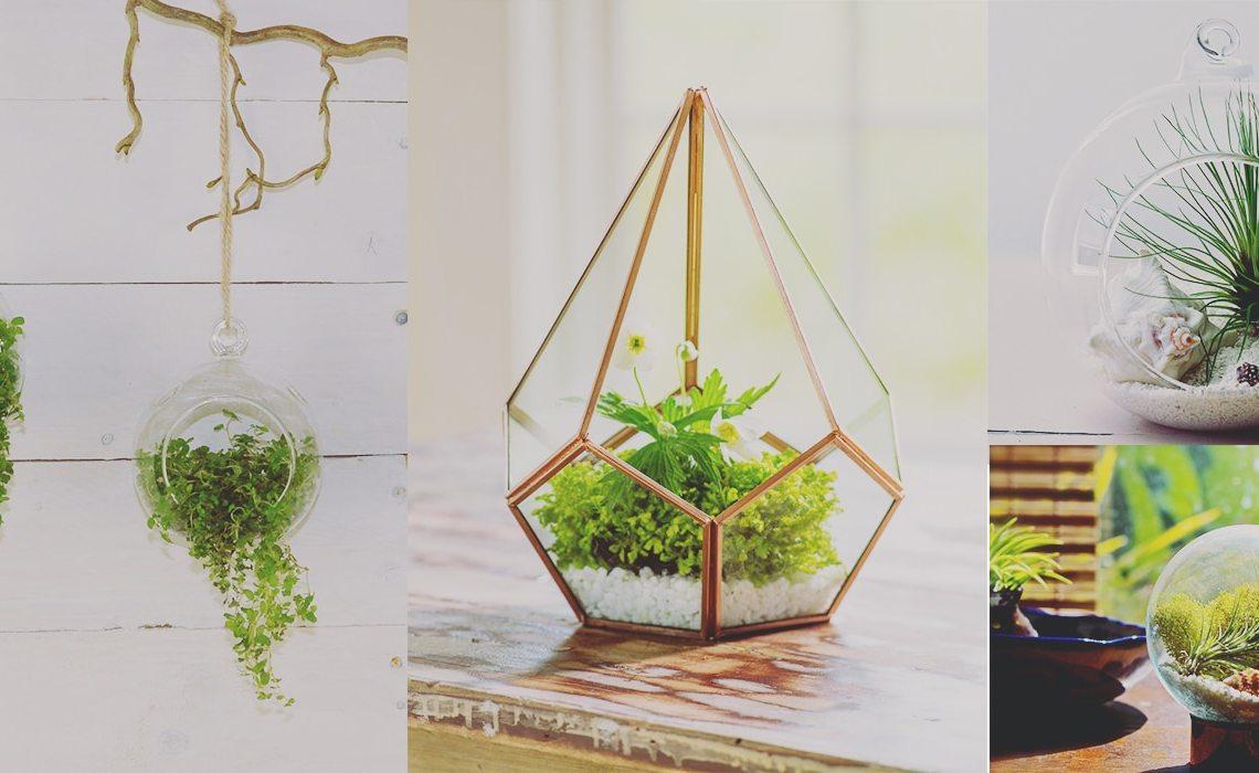 decoracion con pequeños terrarios