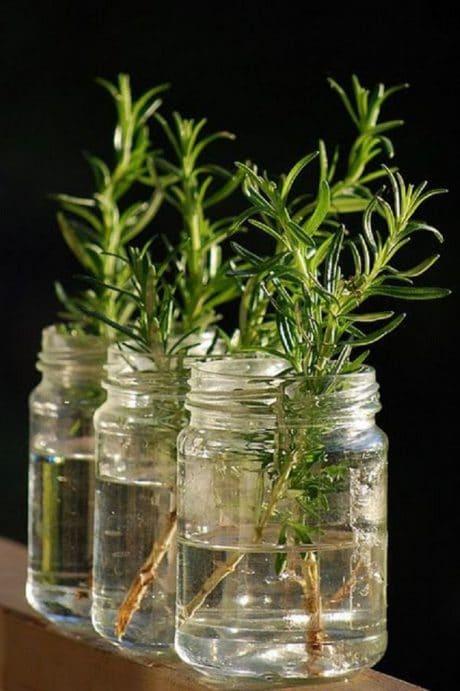 Plantas en agua para decorar
