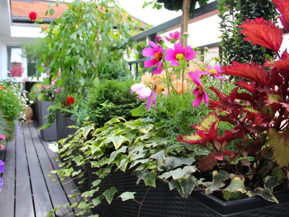 Kwiaty Na Balkon Zachodni Mymicrogarden